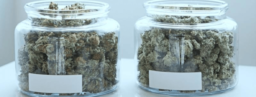 Why is Branding Essential in the Cannabis Industry?