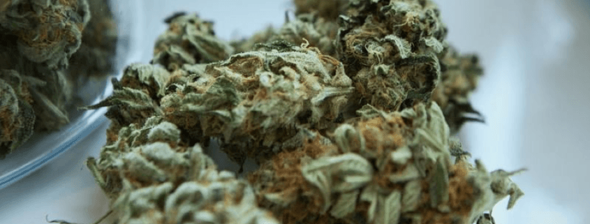 Your Marijuana Dispensary Supply Guide for 2019